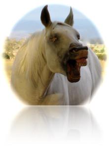 firehorseFront